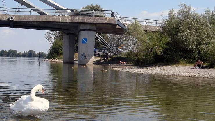 Bei der Brücke in Grenchen tummeln sich bei diesen heissen Temperaturen nicht nur die Tiere, sondern auch immer mehr menschliche Aarefans.