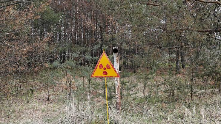 Ein Wald mit einem Warnschild ausserhalb von Tschernobyl. (Archivbild)
