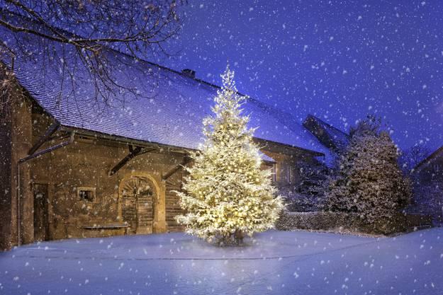Weihnachtsbaum vom Verein ProLinn und Dorfverein Linn