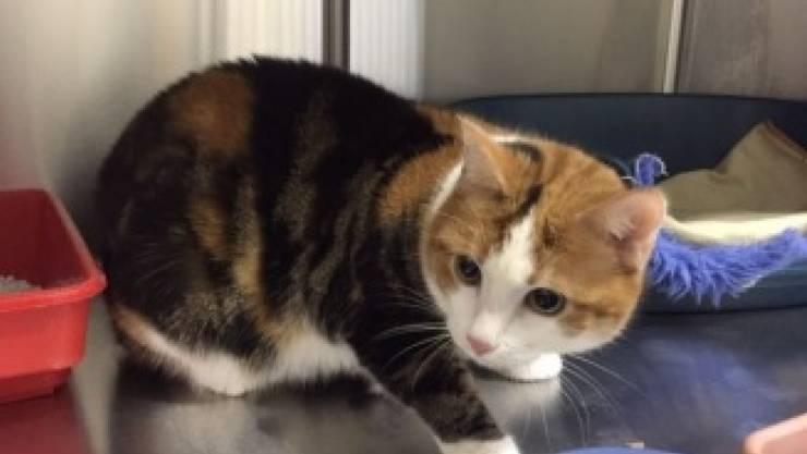 Eines der beiden ausgesetzten Kätzchen blickt neugierig um sich. Zusammen mit einem weiteren Tier war es vor einem Tierheim deponiert worden.