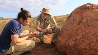 Moderator Stöpper und Ranger Dylan inspizieren einen  Termitenhügel.