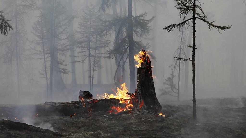 Verheerende Waldbrände in Russland breiten sich aus
