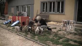 Mehrfach hatten die Hunde einer Züchterin in Leutwil zugebissen. Am Dienstag griff das Aargauer Vetreinäramt durch: Es führte eine Razzia mit Polizeiunterstützung durch und nahm zwei Hunde mit.