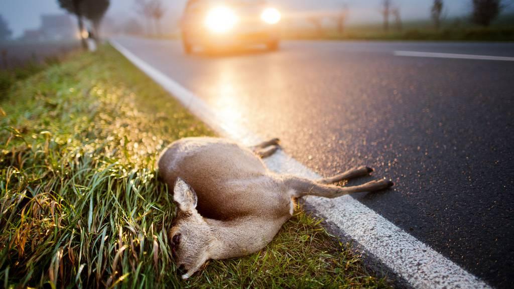 Wildunfälle App Tiere