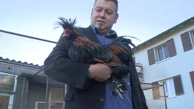 Ungewissheit Vogelgrippe