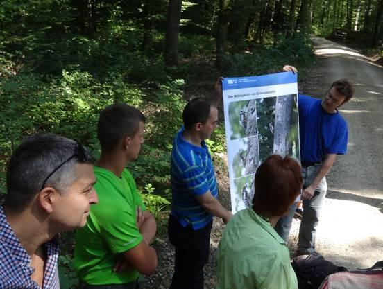 Der Mittelspecht bevorzug Eichenwälder, wie erklärt wurde
