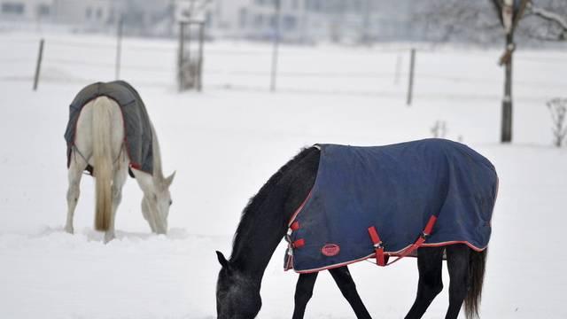 Mit einer Decke geschützt scharren zwei Pferde im Schnee (Archiv)