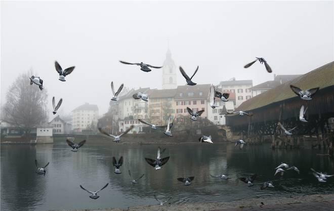 «Tauben fliegen auf» vor der nebligen Kulisse der Oltner Altstadt.