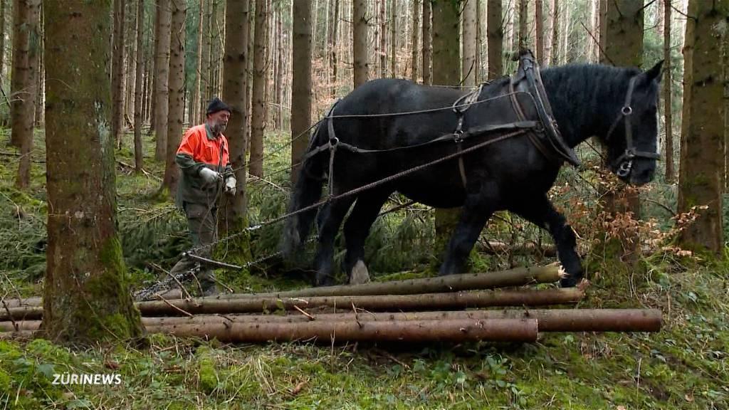 Winterthur räumt Wälder mit Pferden