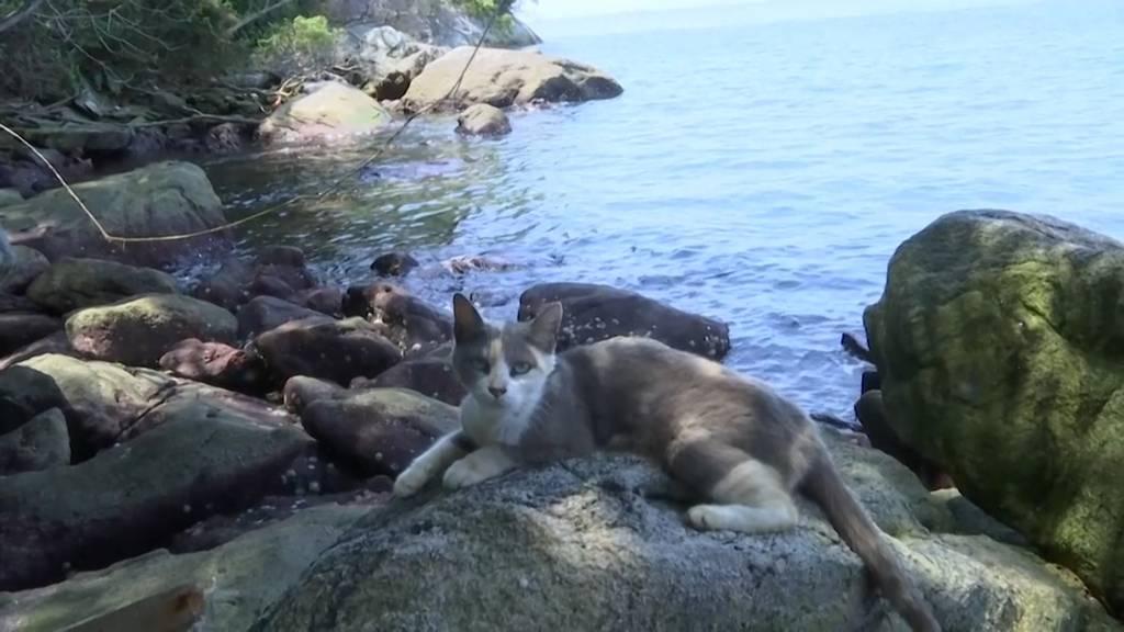 Wegen Lockdown: Katzen auf beliebter Katzen-Insel frassen sich gegenseitig