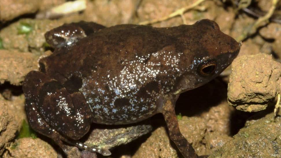 Schweizer Forscher entdecken in Madagaskar neue Froschart