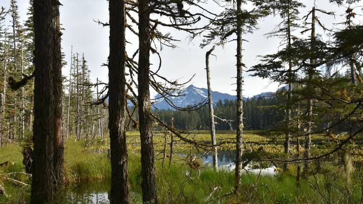 Unendliche Weiten: der Situk Lake Trail im Tongass National Forest