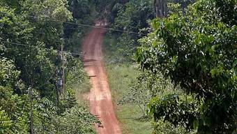 Regenwald weiter in Gefahr (Archiv)