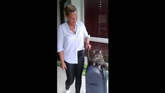 Das Siegervideo: Regina Hak aus Solothurn mit Kater Mio, dem Quartierkönig.
