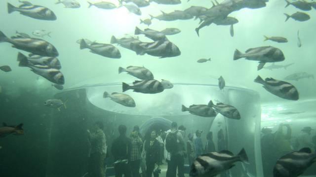 Die Bedeutung der Ozeane für die Menschheit stand im Mittelpunkt der Ausstellung