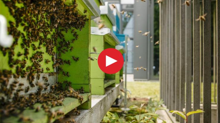 2018-09-10 14_47_19-Live bei den Bienen_ Live bei den Bienen - Schweizer Familie