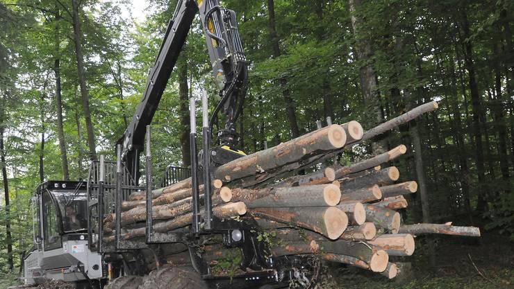 Keine Idylle: Waldpflege mit Maschinen widerspricht Naturprojektionen.  HD