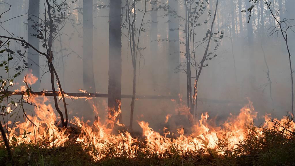 Flammen lodern in einem Wald. Wegen der schweren Waldbrände im Osten Russlands versinken immer mehr Dörfer und Städte im Rauch. Mehr als 105 Siedlungen und die Großstadt Jakutsk in der stark betroffenen sibirischen Region Jakutien (Republik Sacha) litten unter dem Qualm, teilten die Behörden mit. Foto: Ilya Timin/AP/dpa