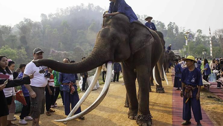 Elefanten-Parade im thailändischen Lampang. Die Dickhäuter sind auch eine Touristenattraktion. (Archiv)