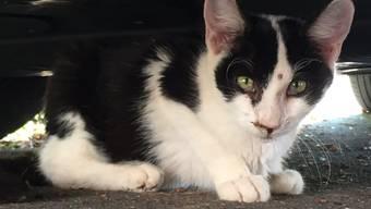 Auch diese Katze konnte von der Organisation Netap eingefangen und kastriert werden.