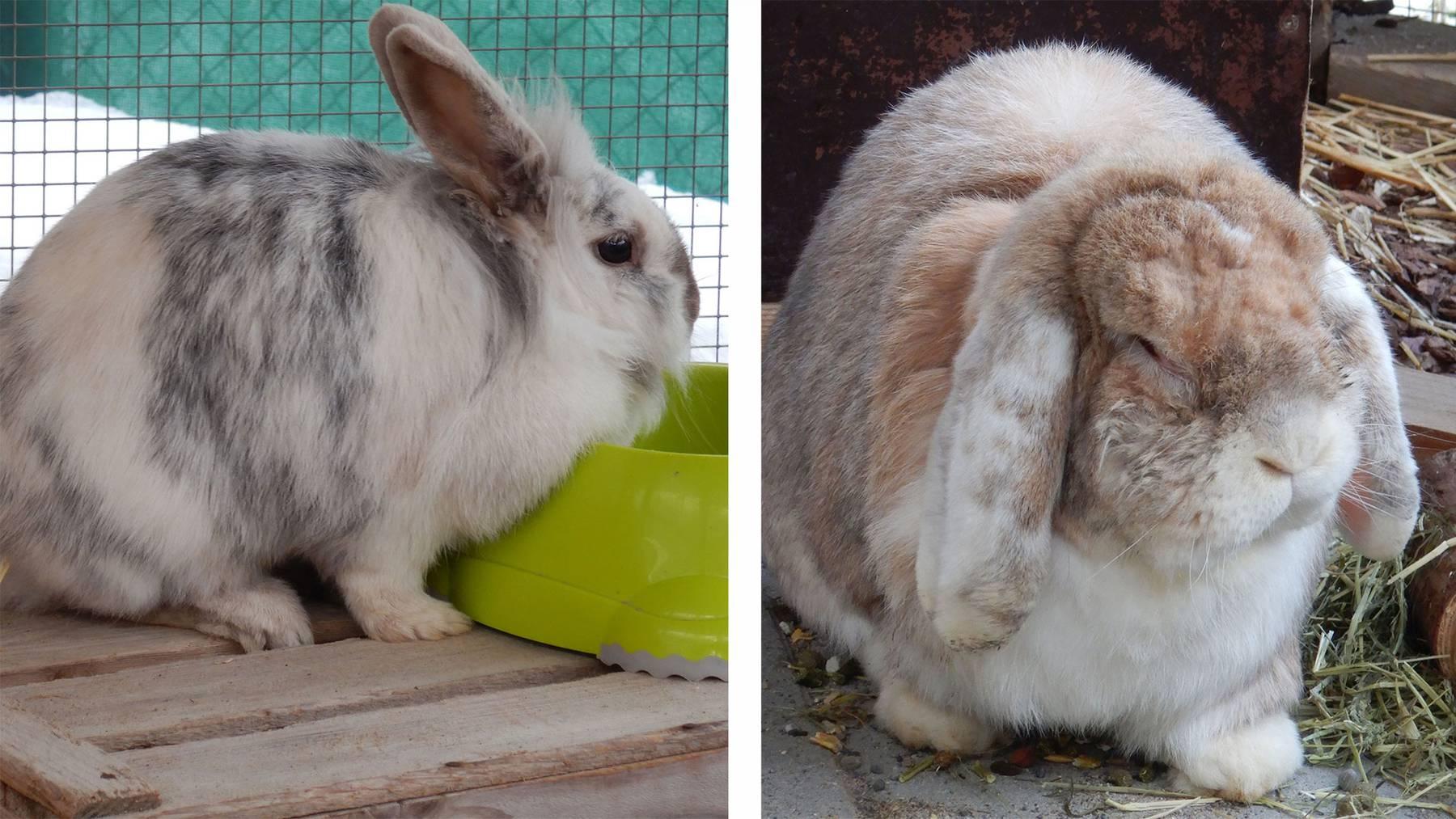 Kaninchen Pinky & Brain