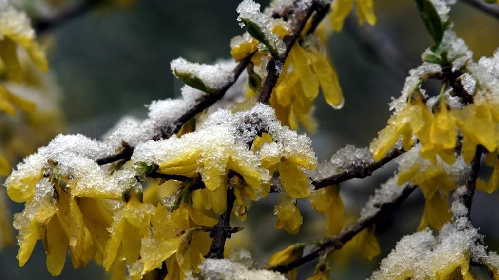 Mit der Umstellung auf Sommerzeit kommen Frost und Schnee