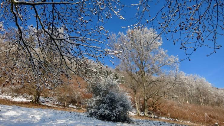 Winterzauber am Blauen