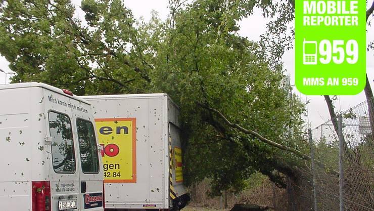 Baum fällt auf Auto