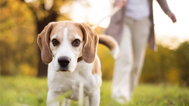 Während der Arbeitszeit zum Tierarzt? Arbeitgeber haben keine Freude an der Abwesenheit. Das sagt das Gesetz.