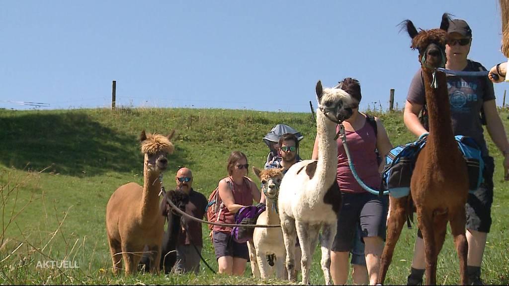 Mit einem Alpaka auf Wanderung am Weissenstein