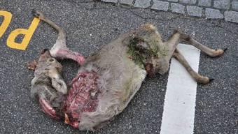 Die tote Rehgeiss wurde an der Forststrasse gefunden.