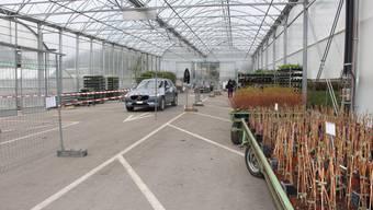 Drive-Through-Setzlingsverkauf im Gartencenter Zulauf in Schinznach-Dorf: Wenn Abstandhalten im Coop funktioniert, warum dann nicht auch in Gartencentern oder Möbelhäusern?