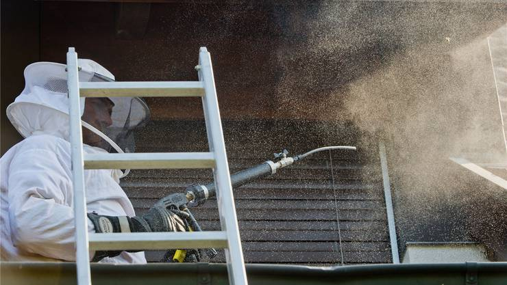 Ein Aargauer Feuerwehrmann bekämpft ein Wespennest mit Bioziden. Bild: Emanuel Freudiger/Archiv(
