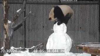 Da Mao hat Spass im Schnee.