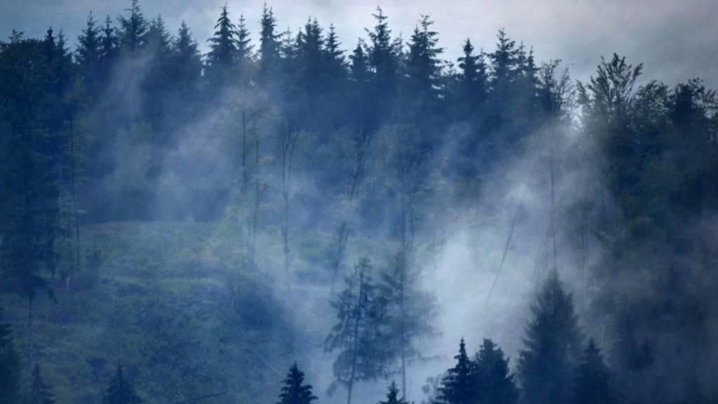 Aufforstung in Europa könnte mehr Regen bringen