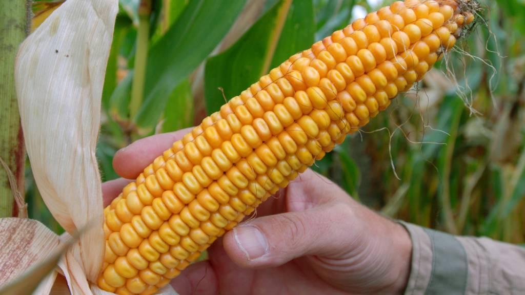 Wallis will eine gentechfreie Landwirtschaft