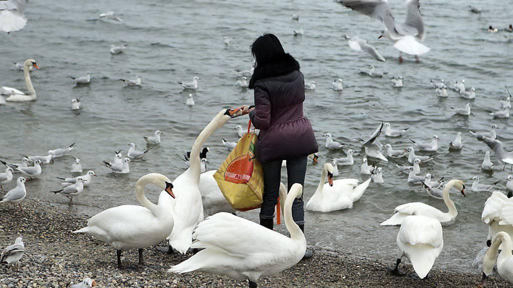 Das Vogelgrippevirus wurde nun auch in toten Vögeln im Walliser Chablais, bei der Einmündung der Rhone in den Genfersee, nachgewiesen. (Symbolbild)
