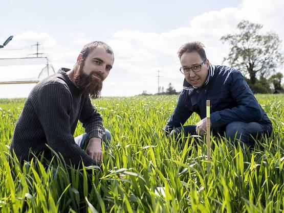 Agroscope-Forscher Marcel van der Heijden (links) und Raphael Wittwer kontrollieren die Felder für die Messung der Lachgas-Emissionen.