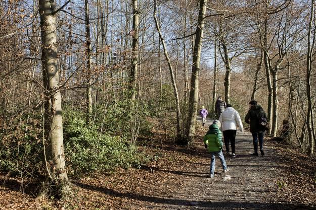 Menschen geniessen das Wetter im Wald