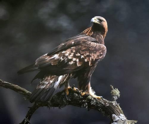 Ganz in dieser Gegend gibt es auch eine junge Adlerfamilie, die aber nur der Photograph zu sehen bekam