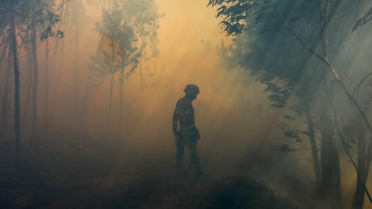 Bei Waldbränden in Portugal ist ein Feuerwehrmann ums Leben gekommen. Im laufenden Jahr sind damit bereits fünf Feuerwehrleute durch Brände getötet worden. (Archivbild)