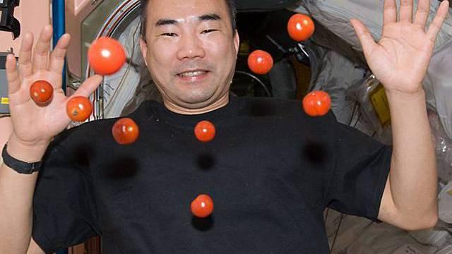 """Der japansiche Astronaut Soichi Noguchi bei einem """"Cherry-Tomaten-Experiment"""""""