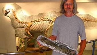 Ben Pabst, Grabungsleiter in Frick, zeigt einen mächtigen Dinoknochen im Sauriermuseum