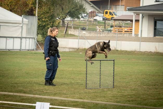 Gin von der Abendweide gewinnt die Verbandsprüfung für Polizeihunde