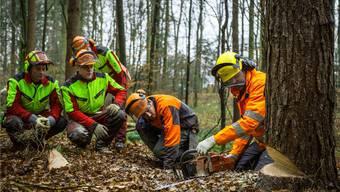 Holzfäller-Kurs im Suhret zwischen Suhr und Rupperswil