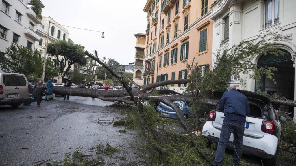 Der Sturm fällte auch Bäume, wie hier eine Pinie in Rom.