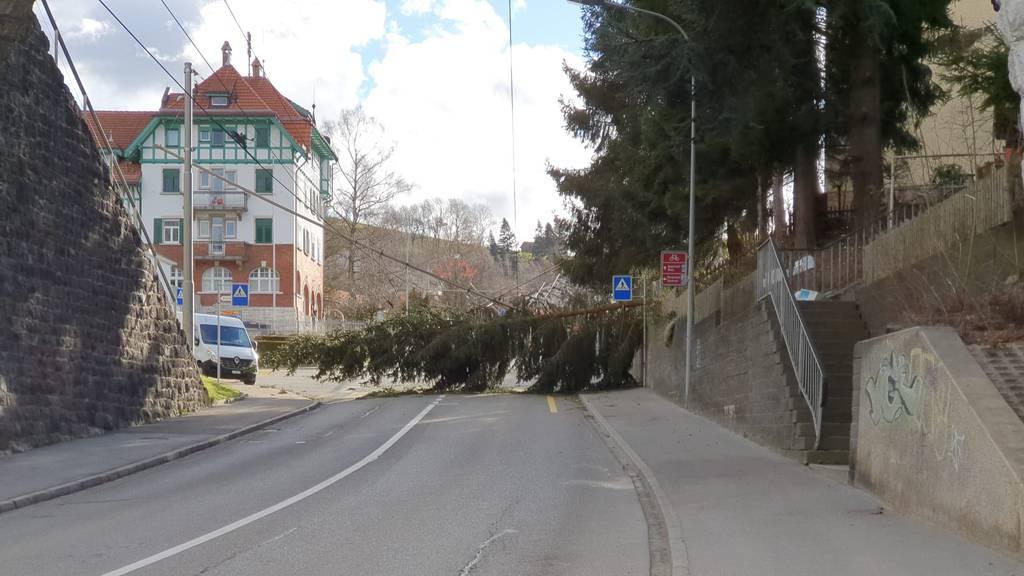 Diese Schäden hinterlässt Sturm «Sabine» in der Ostschweiz