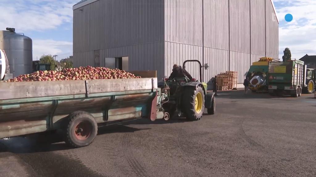 Trotz magerer Apfelernte: Keine Engpässe bei Apfelsaft von Möhl