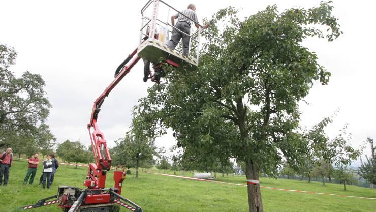 Demonstration: Der Rückschnitt oder Rückriss eines Obstbaums kann mithilfe einer Hebebühne ausgeführt werden. (Alois Felber)