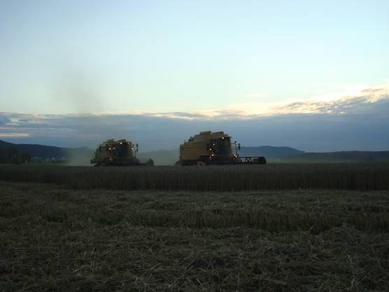 Weizen dreschen: Mit zwei Wagen ist es effizienter.